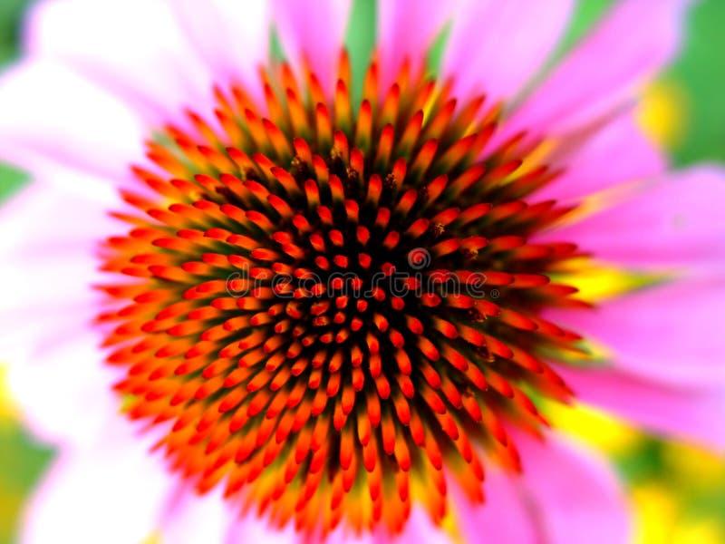 Download Needles stock photo. Image of needles, bloom, meadow, makro - 16618