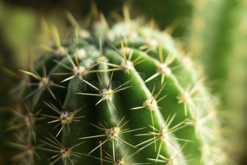 Needles and green stalks of a cactus close up stock photo