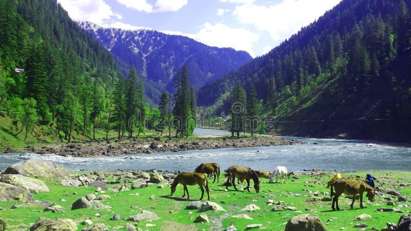 Neelum Dolinny Kaszmir Pakistan obrazy royalty free
