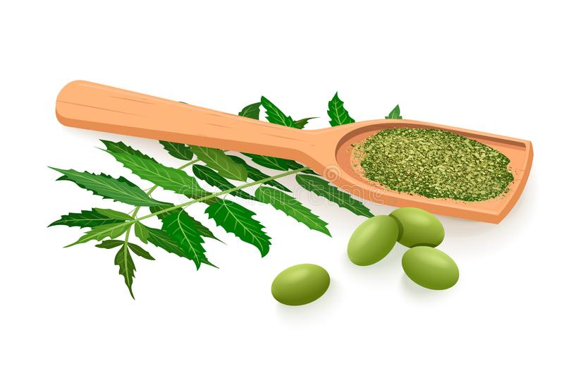 Neem branch, flowers, leaves, fruits and pods, powder in wooden spoon. Ayurveda Herb vector illustration