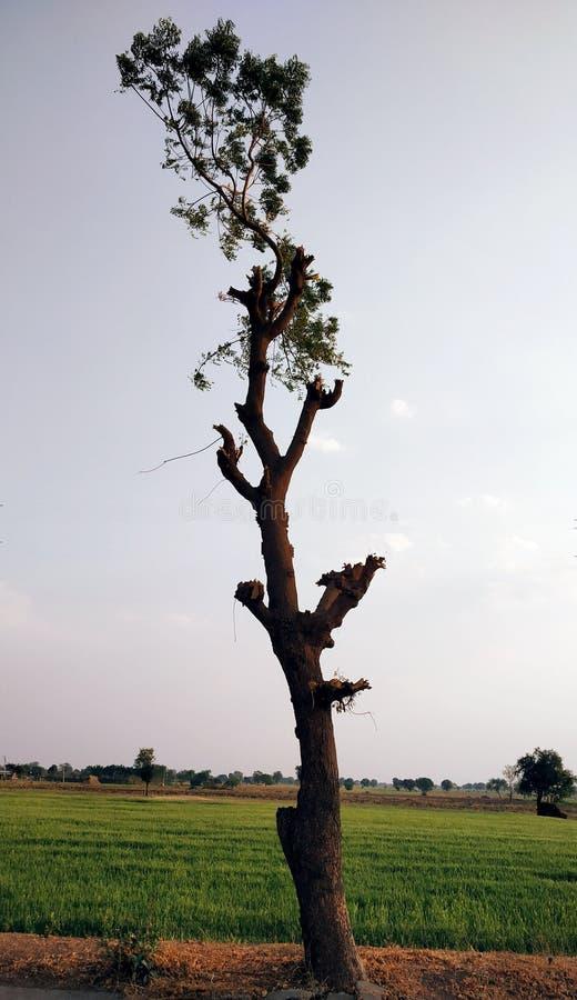 Neem drzewa stojak stanowczo obraz stock