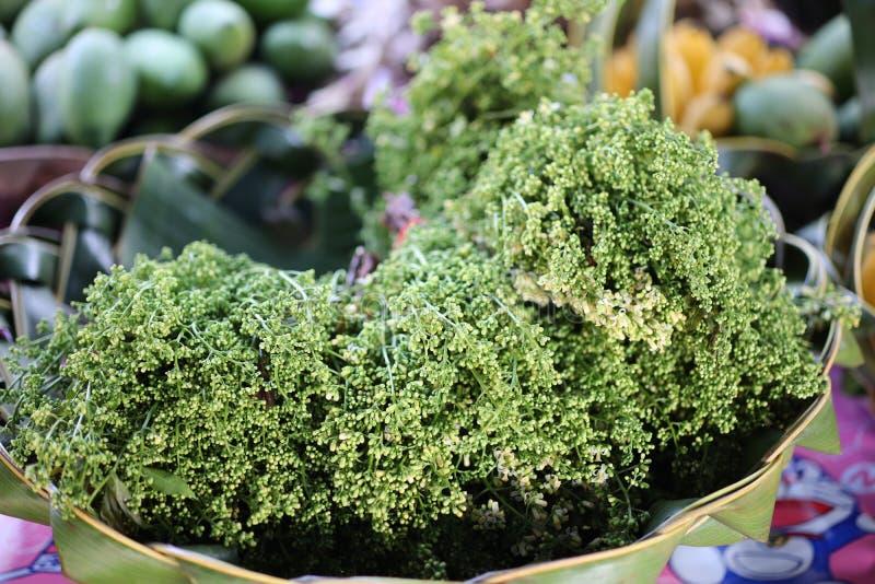 Neem en lokal medicinalväxt som det thailändska folket föredrar att konsumera på länge och förutom att användas som mat som använ arkivbilder