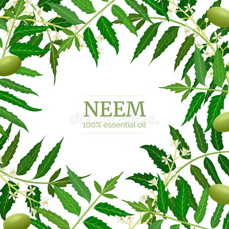 Neem Leaf, Fruits And Flowers  Ayurveda Herb  Used For Eye Disorders