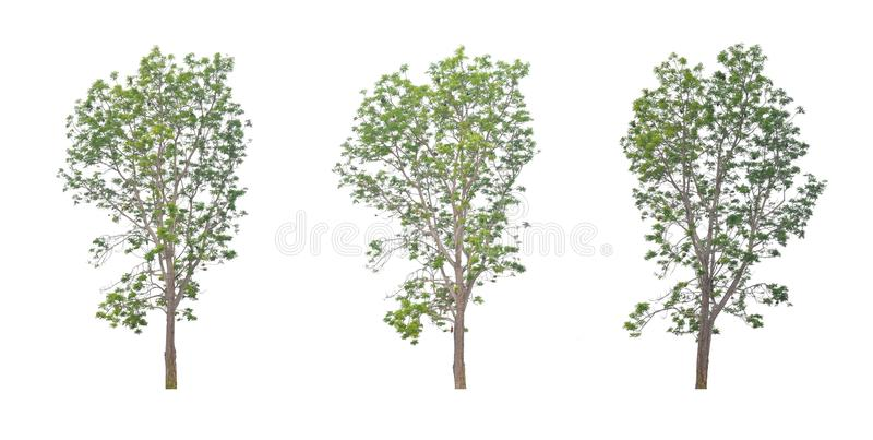 Neem leaves are a bush are beautiful. stock images