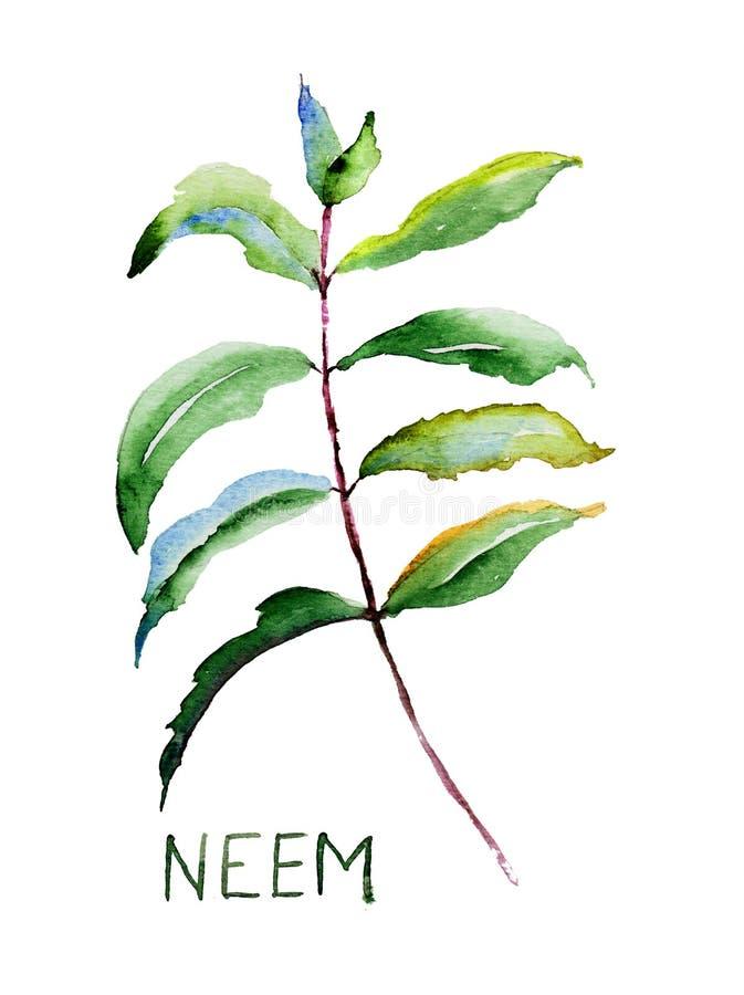 Neem leaves stock illustration