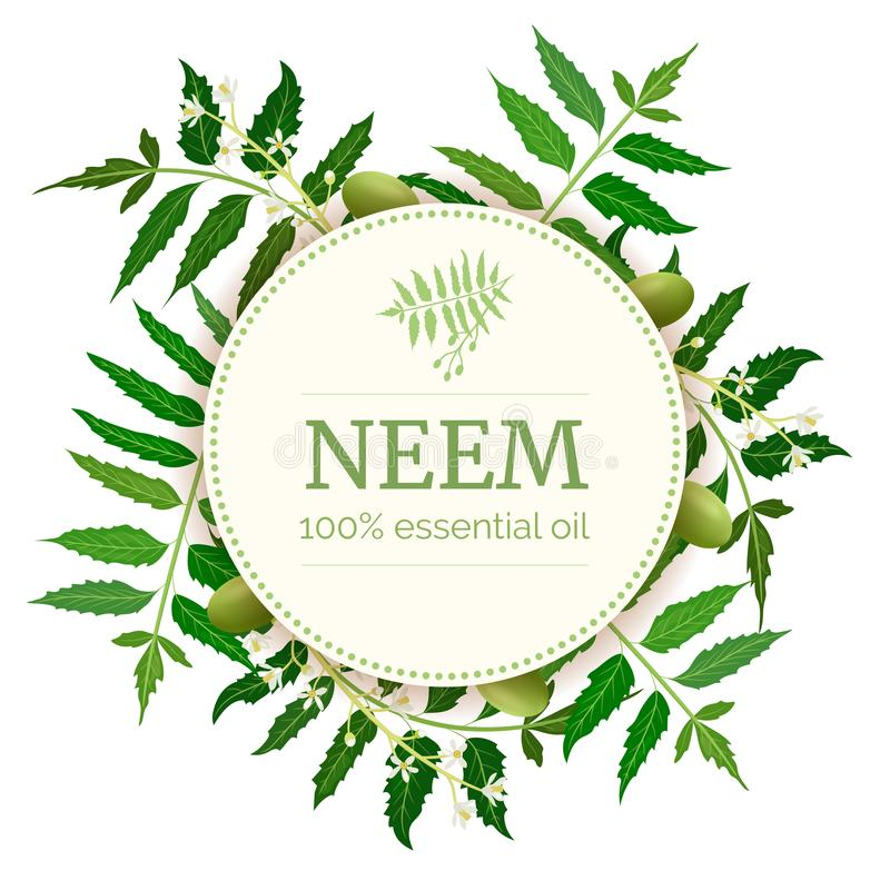 Neem Round Circle badge. leaf branch, flowers and pods. Ayurveda Herb template royalty free illustration