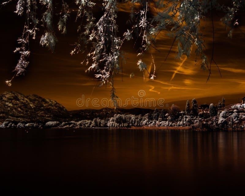 Neerhangende bladeren in de voorgrond over een baai met de waterkant onder een oranje hemel met contrails royalty-vrije stock foto's