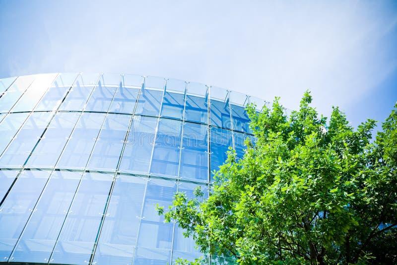 Negócio verde e árvore fotografia de stock royalty free