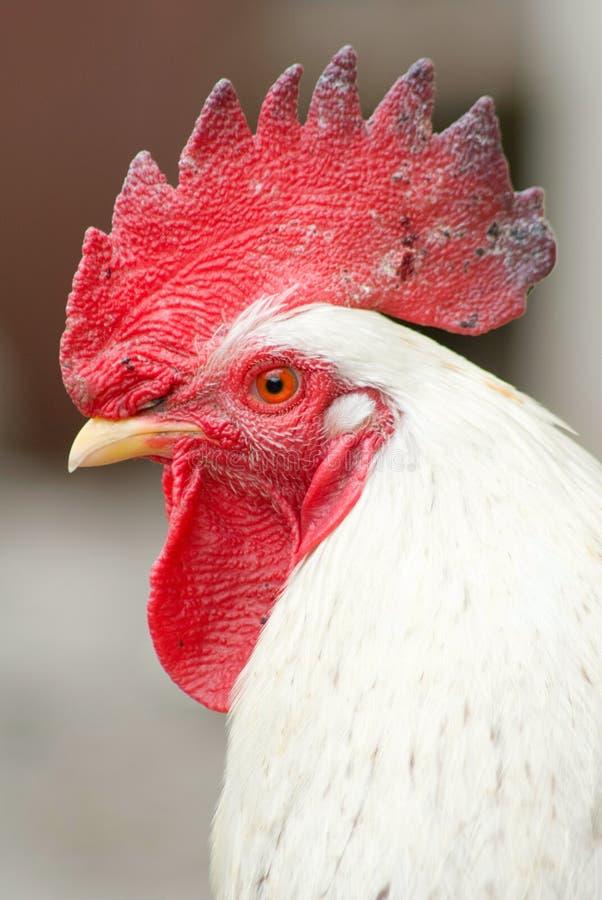 Negación de la gripe de pájaro fotos de archivo libres de regalías