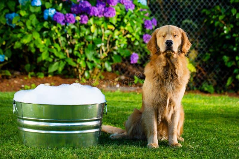 Negación del perro foto de archivo libre de regalías