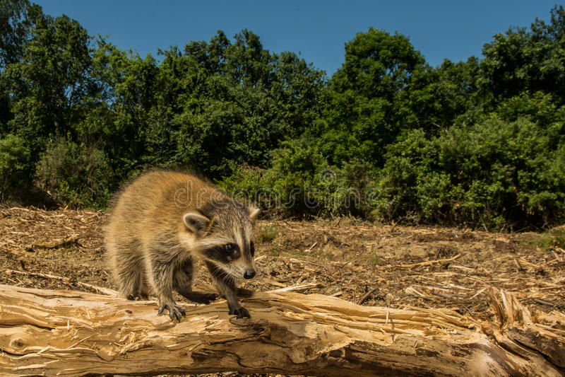 Negative Auswirkungen der Abholzung lizenzfreie stockbilder
