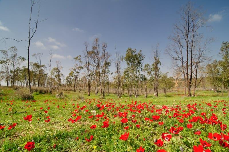 negev kwitnąca pustynna wschodnia wiosna zdjęcie stock
