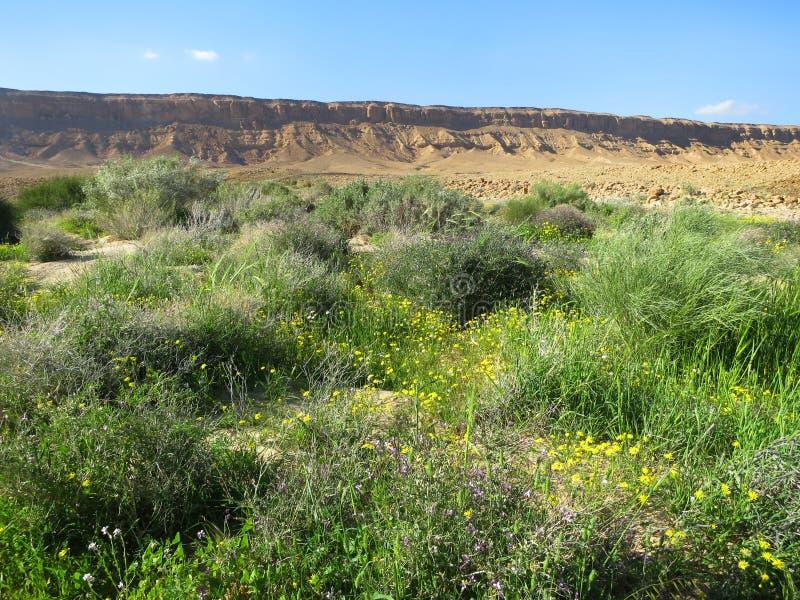 Negev-woestijn im bloei; Wüste Negev in der Blüte; Cra Mitzpe Ramon lizenzfreie stockfotografie