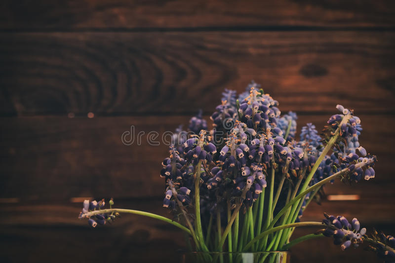 Neglectum Muscari Gronowi winogrona na drewnianym tle obrazy stock