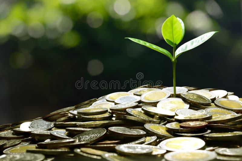Negocio, ahorro, crecimiento, concepto económico fotografía de archivo libre de regalías