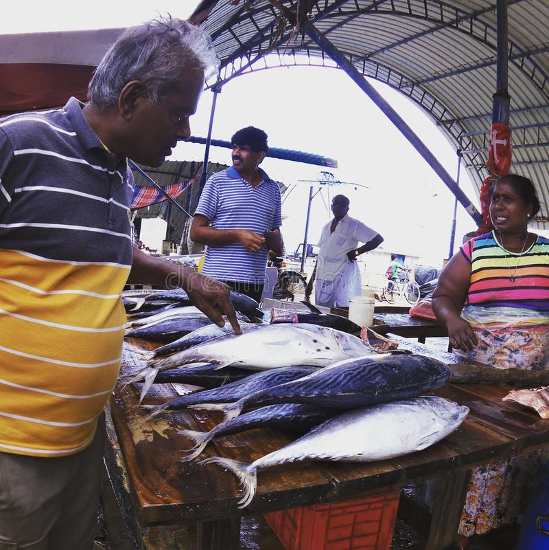 Negombo鱼市:金枪鱼 免版税库存照片