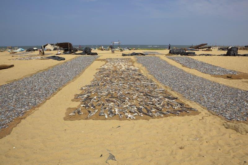 Negombo beach stock images