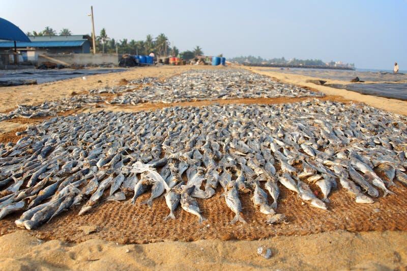 Negombo fish market royalty free stock photos