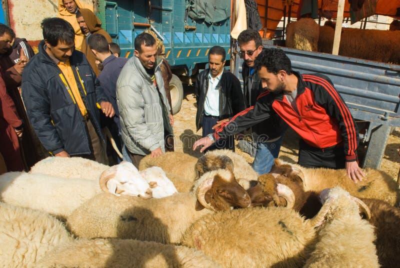 Negoziando per una pecora per il sacrificio di Al di Eid fotografie stock libere da diritti