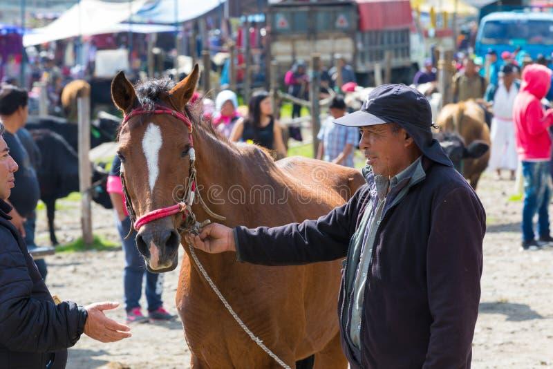 Negoziato per la vendita di un cavallo al mercato dell'animale di Otavalo immagine stock