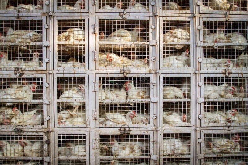 Negozio del pollo in India immagini stock libere da diritti