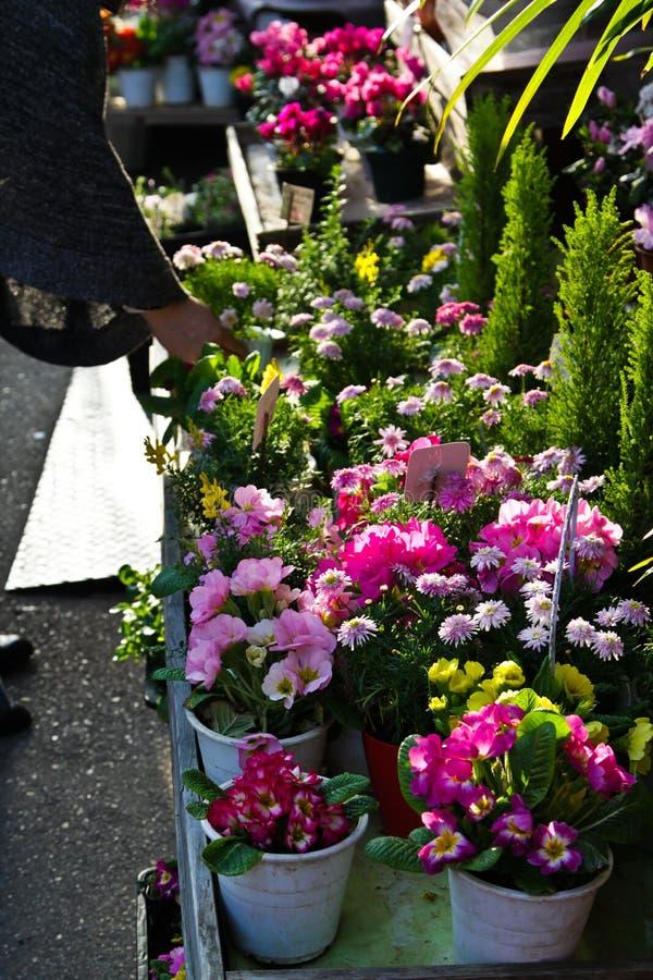 Negozio di fiore all'aperto giapponese fotografia stock