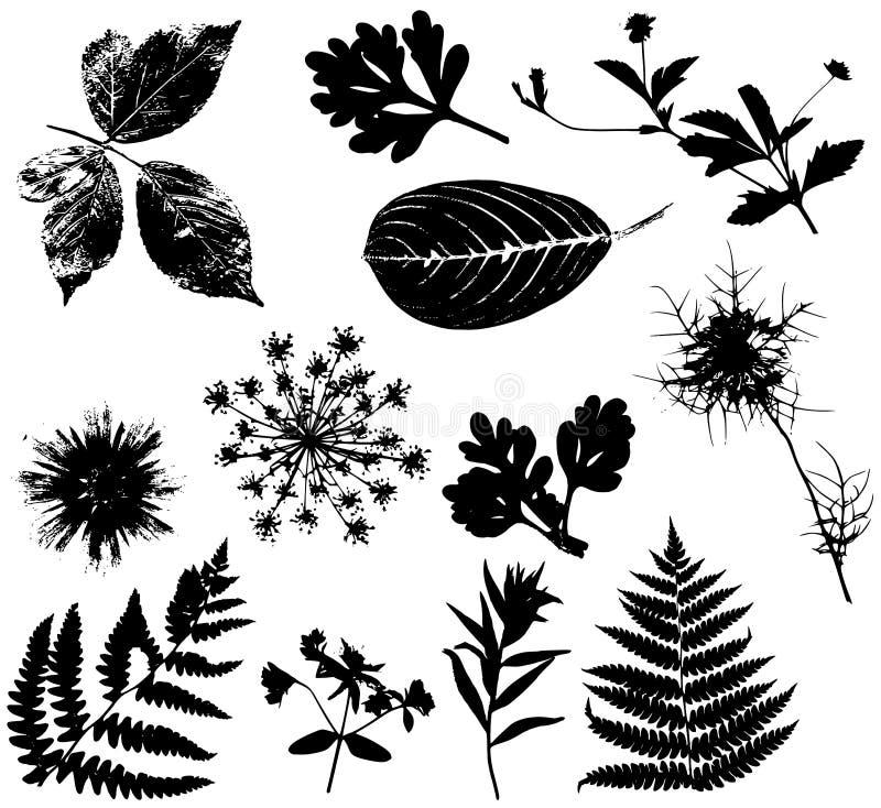Negro 1 de los vectores de las hojas de las flores stock de ilustración