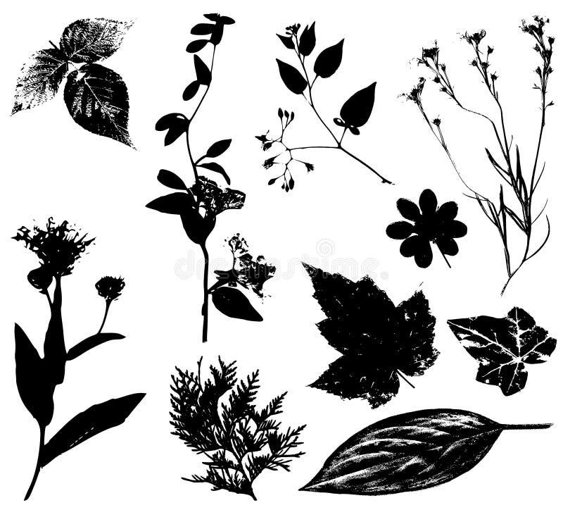 Negro 2 de los vectores de las hojas de las flores ilustración del vector