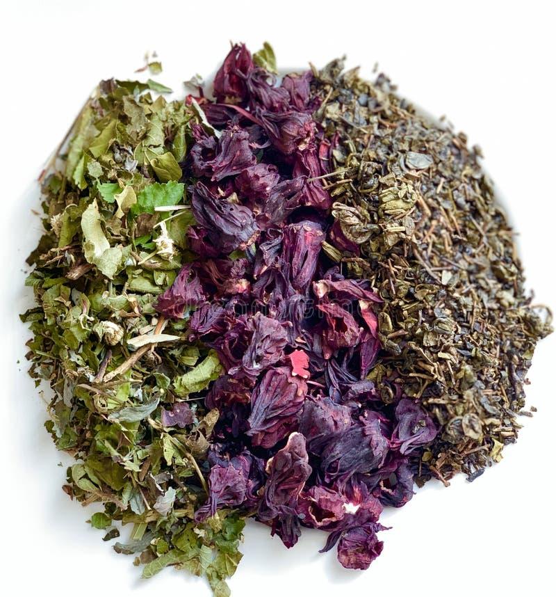 Negro del té verde, flores de hibiscos Combinación hermosa de flores en un fondo blanco imágenes de archivo libres de regalías