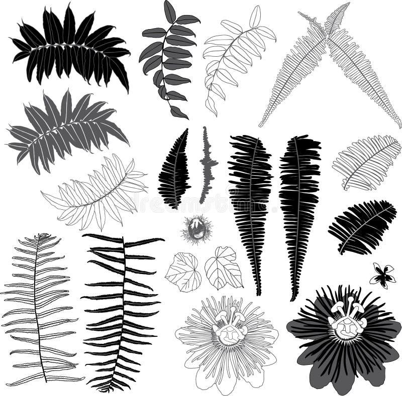 Negro del vector y elementos suburbanos grises de la selva con las hojas tropicales y la flor salvaje Ilustraci?n del vector libre illustration