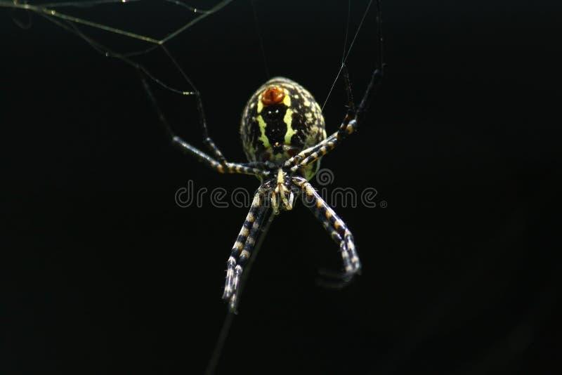 Negro espeluznante de la araña imagen de archivo libre de regalías