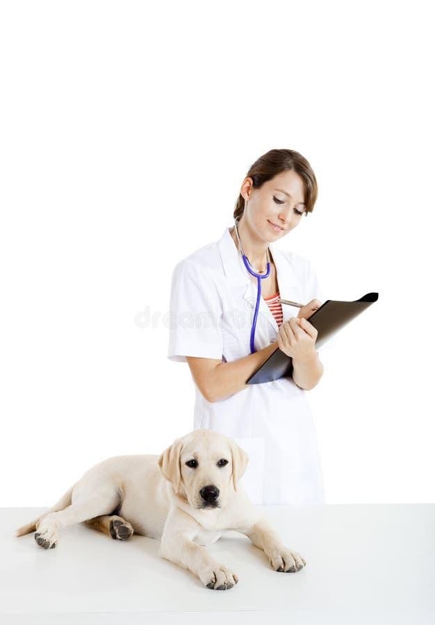 Nehmende Veterinärsorgfalt eines Hundes lizenzfreie stockfotos