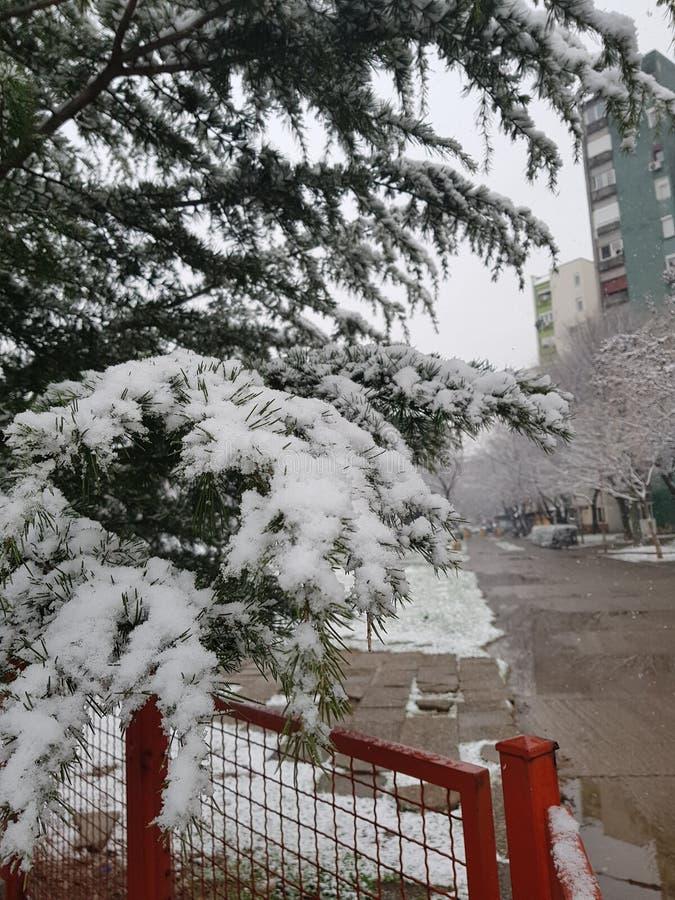 Neige à Podgorica images stock