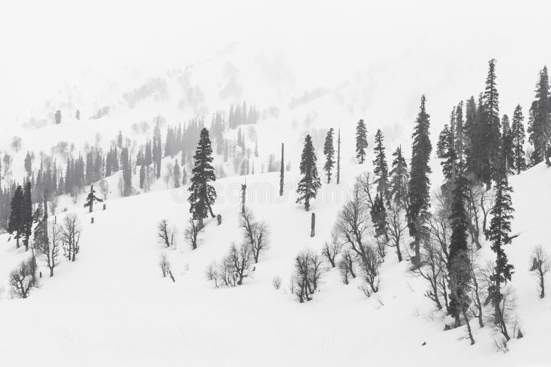 Download Neige photo stock. Image du extérieur, côte, sapin, brouillard - 45353292