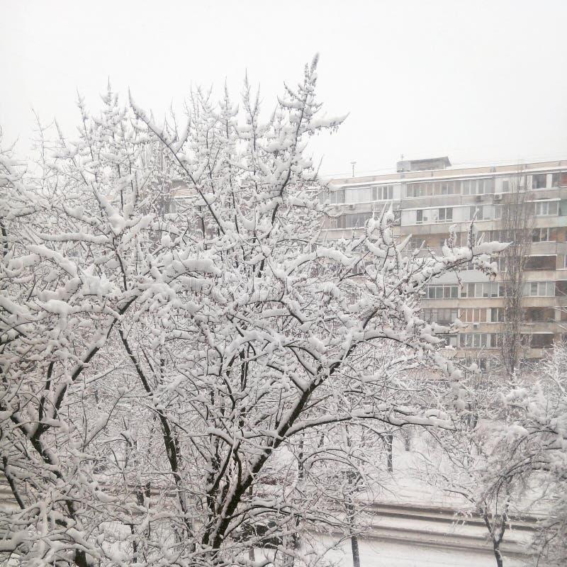 neige photographie stock libre de droits