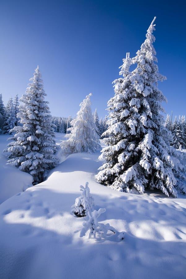 Download Neige image stock. Image du congelé, scintillement, froid - 8669465