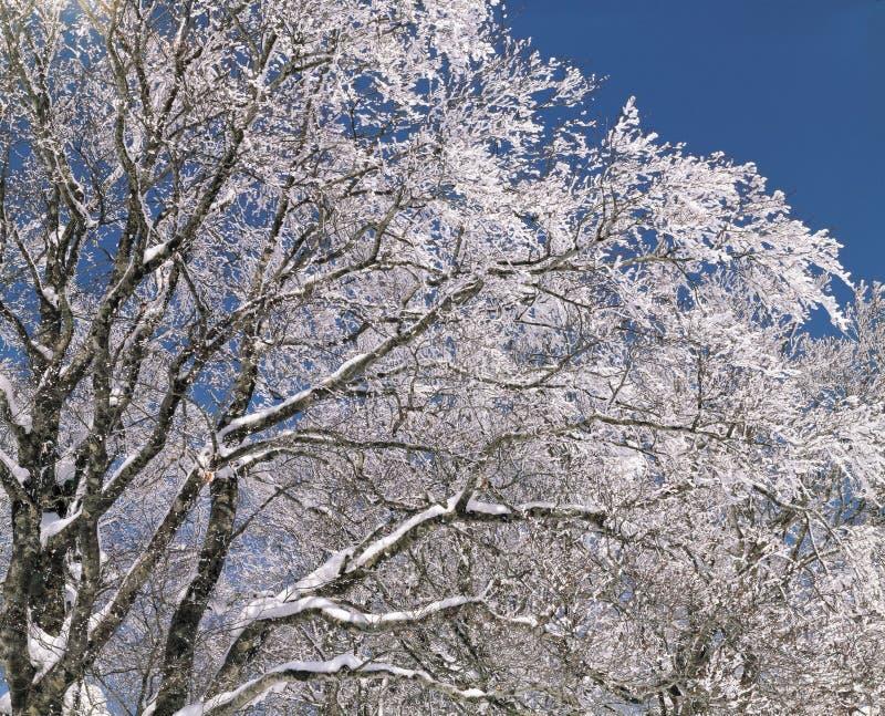 Neige au-dessus d'arbre photographie stock libre de droits