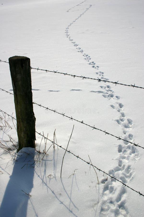 Neige avec des traces photos libres de droits