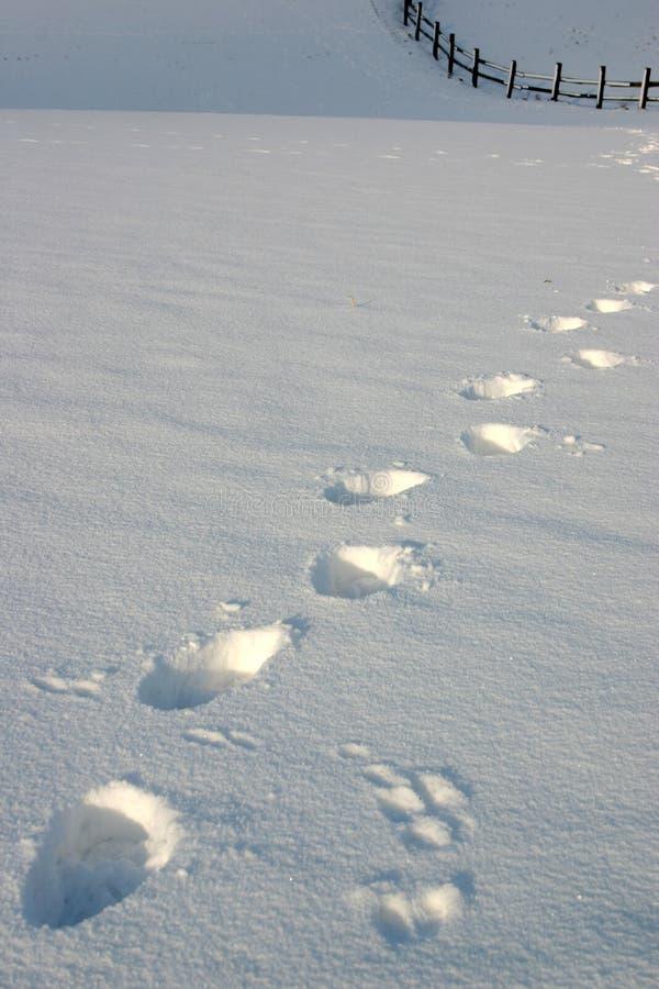 Neige avec des traces image libre de droits