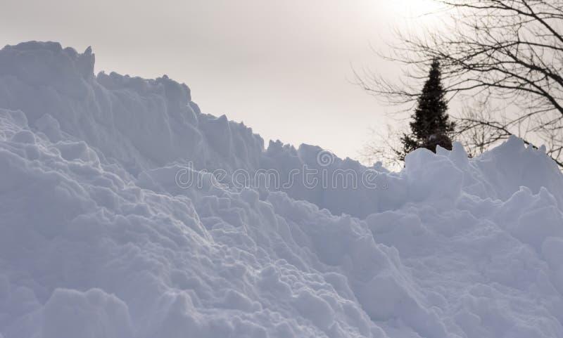Neige avec l'arbre impeccable flou et la lumière du soleil derrière image libre de droits