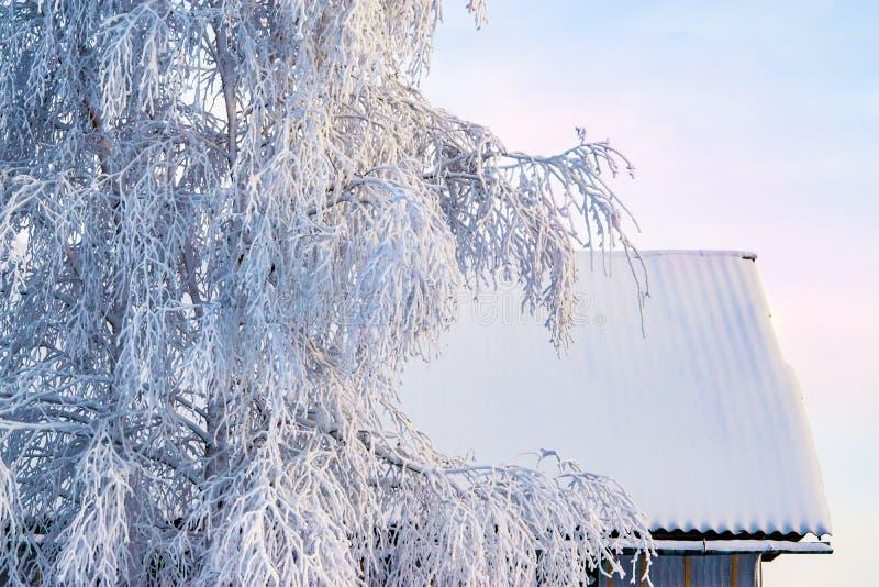 Neige blanche naturelle, gelée, givre sur les branches des arbres de bouleau contre le ciel d'hiver, plan rapproché, photographie stock libre de droits