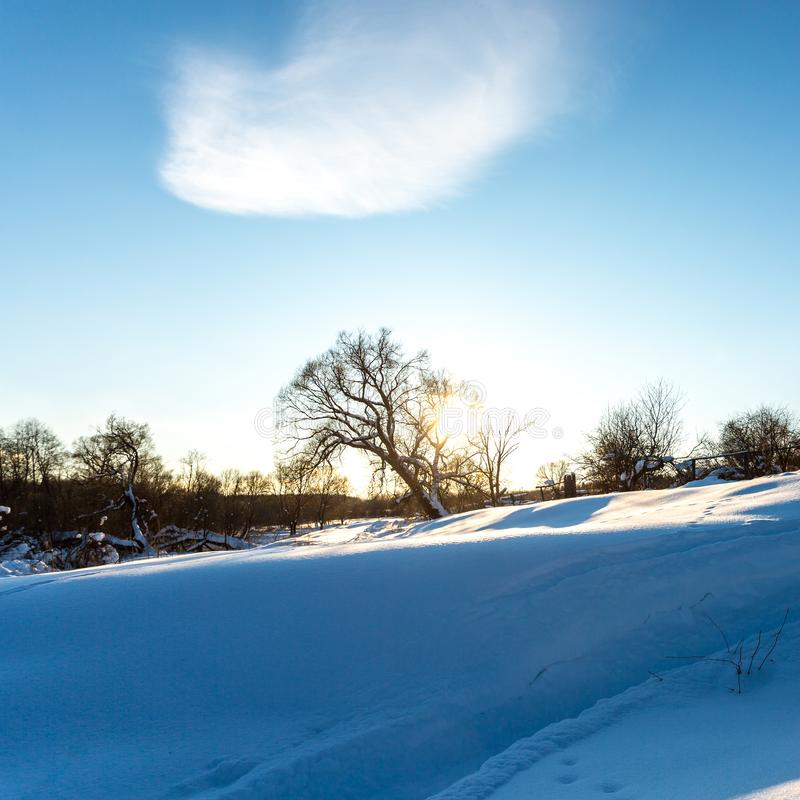 Neige blanche pelucheuse sur l'arbre dans les rayons du coucher du soleil Soirée givrée d'hiver images libres de droits