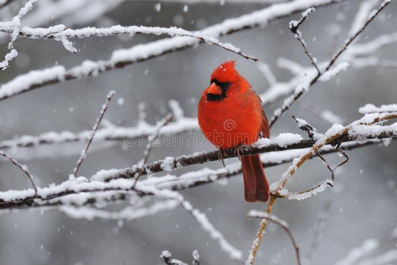 Neige cardinale 4
