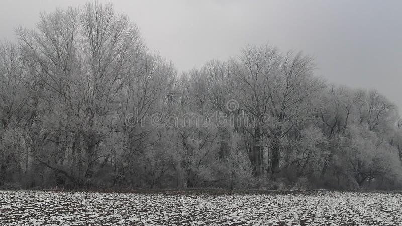 Neige congelée sur la forêt photographie stock