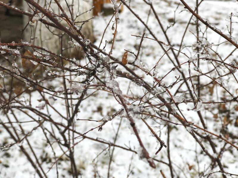 Neige congelée sur un brin d'un arbre Neige sur la rue de la ville Le début de l'hiver dans Bakuriani images libres de droits