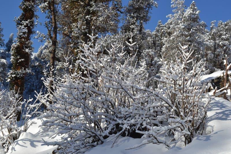 Neige couverte photo libre de droits