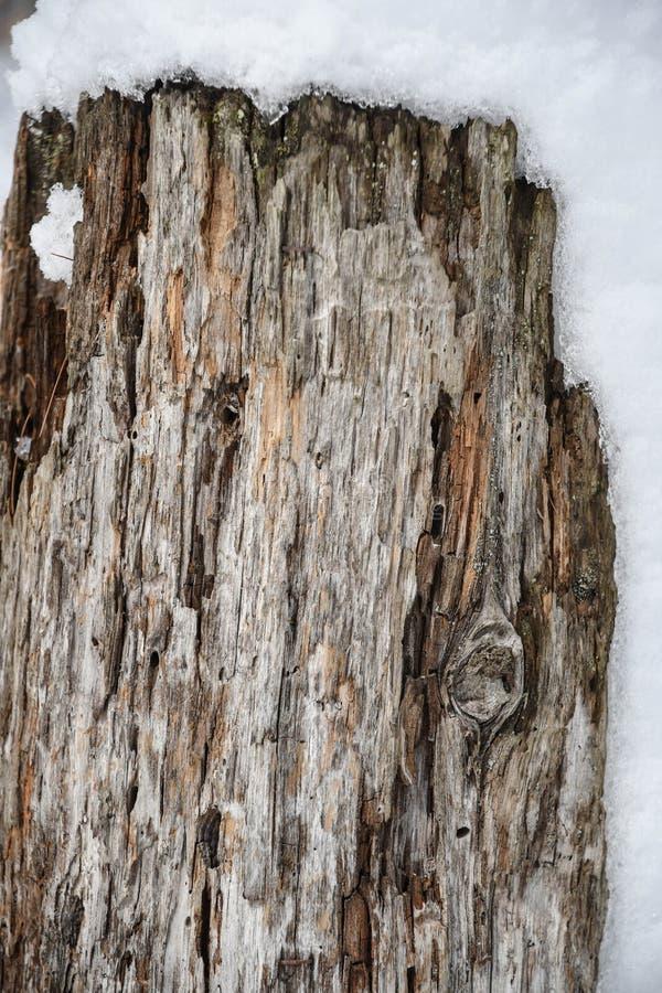 Neige couvrant un poteau en bois de décomposition photographie stock libre de droits