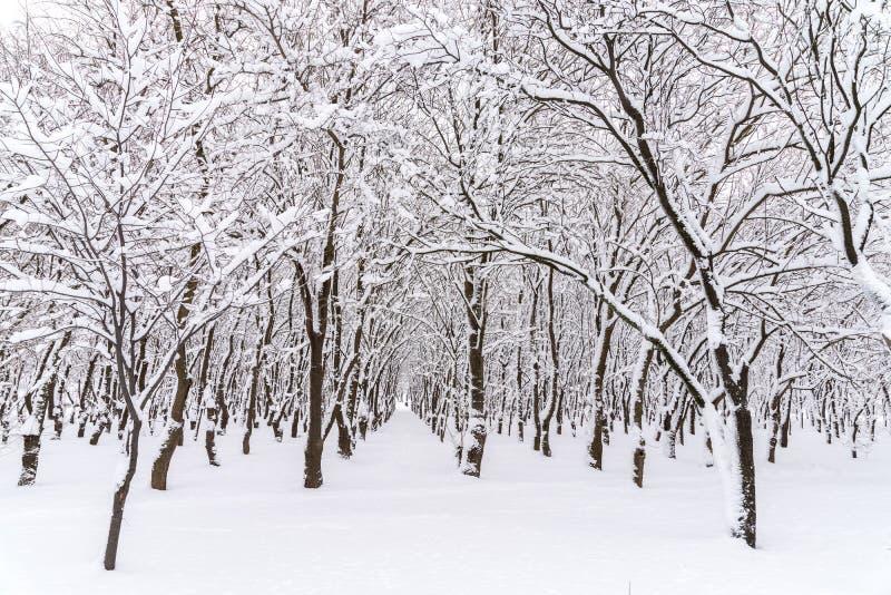 Neige d'hiver sur Forest Trees photo libre de droits