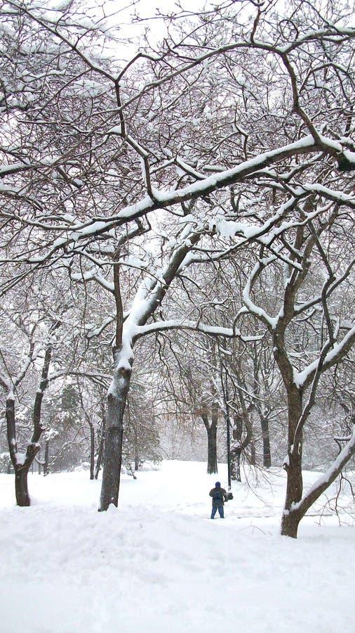 Neige dans le Central Park New York images libres de droits