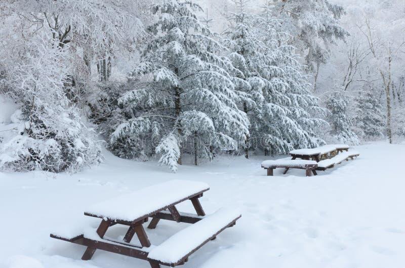 Neige de blanc d'hiver Fond de Noël avec les sapins neigeux korea images libres de droits